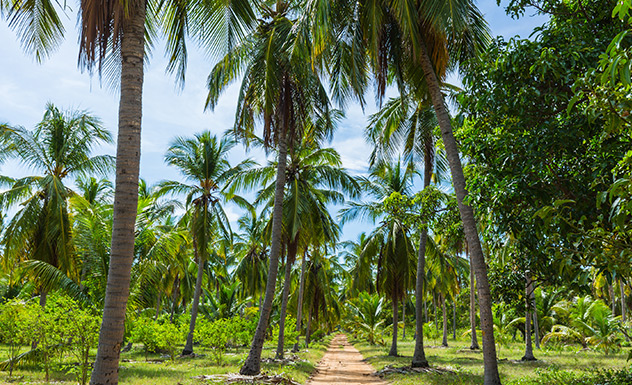 Coconuts in Culture & Cuisine - Experience - Sri Lanka In Style