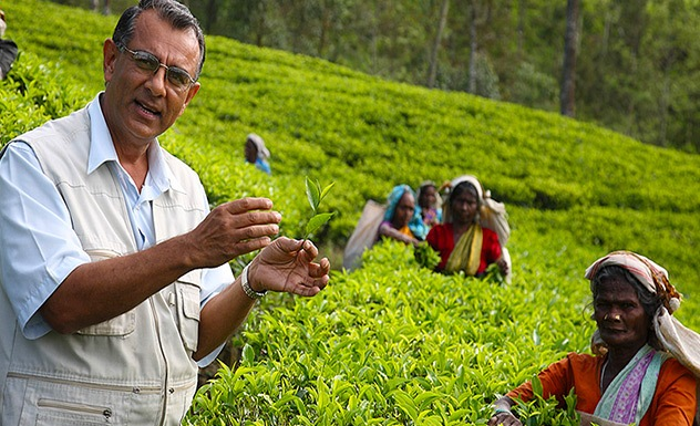 Tea Trails experience: tea factory with a resident planter - Experience - Sri Lanka In Style