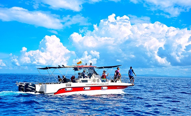 Whale watching by private speedboat – mirissa - Experience - Sri Lanka In Style