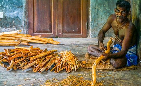 Southern Cinnamon Tales - Galle -  Sri Lanka In Style
