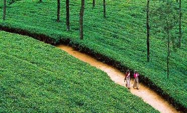 Tea Trails experience: cycling - Ceylon Tea Trails - Norwood - Sri Lanka In Style