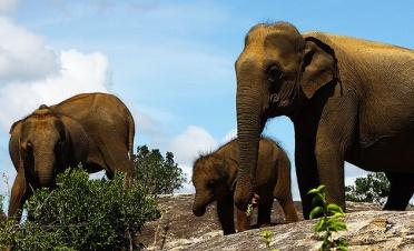 Jeep safaris in Yala National Park - Leopard Trails - Yala - Sri Lanka In Style