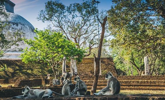 A Picnic with Primates - Polonnaruwa -  Sri Lanka In Style