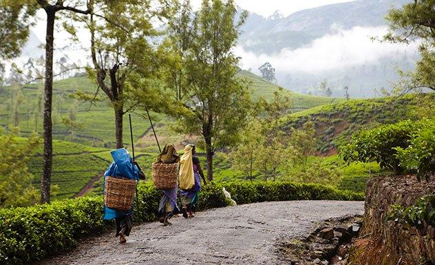 Ceylon Tea Trails - Summerville - Sri Lanka In Style