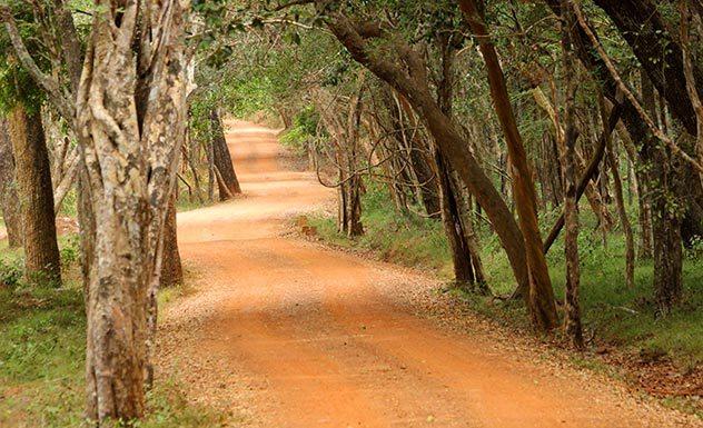 Noel Rodrigo's Leopard Safaris Camp Wilpattu - Sri Lanka In Style