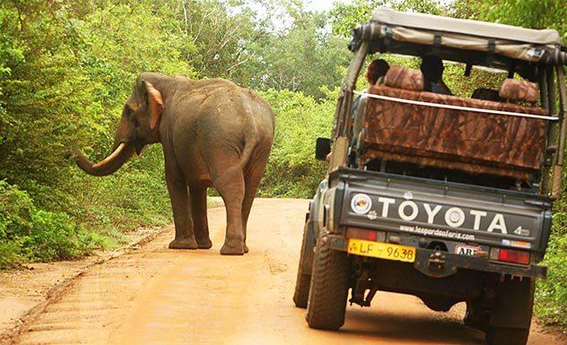 Noel Rodrigo's Leopard Safaris Camp - Yala - Sri Lanka In Style