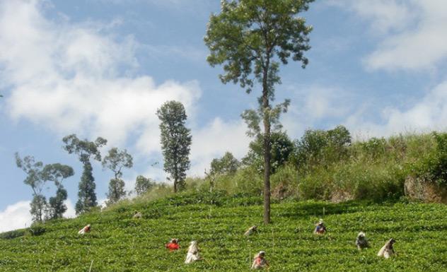 Ashburnham Estate - Sri Lanka In Style