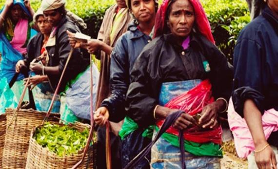 The Rothchild's tea factory – Pussellawa - Hatton -  Sri Lanka In Style