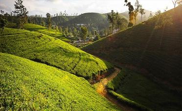 Tea Trails experience: tea factory with a resident planter - Ceylon Tea Trails - Norwood - Sri Lanka In Style