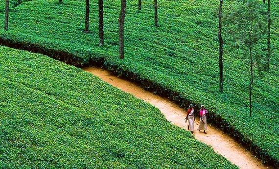 Tea Trails experience: cycling - Hatton -  Sri Lanka In Style