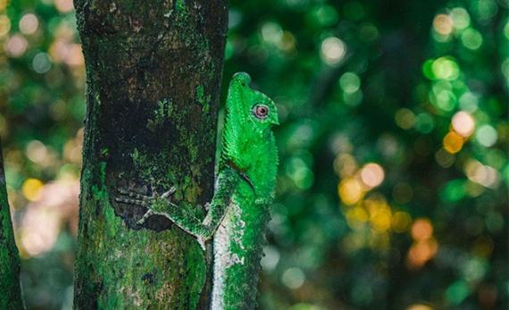Kanneliya Rainforest trek with lunch in a lake - Galle -  Sri Lanka In Style
