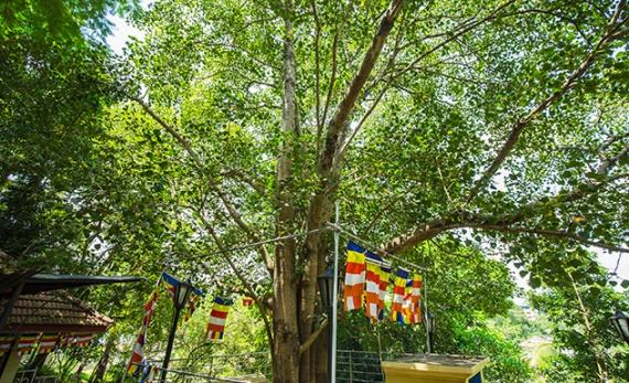 Bhikkuni: the Buddhist Nuns of Sri Lanka - Kandy -  Sri Lanka In Style