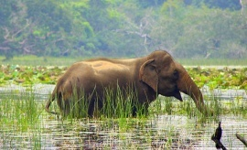 Wilpattu National Park - Sri Lanka In Style