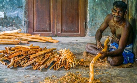 Ceylon Cinnamon - Galle -  Sri Lanka In Style