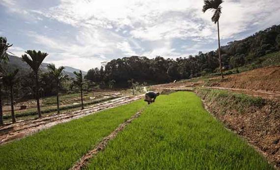 A scenic trek through a hidden hamlet - Kandy -  Sri Lanka In Style