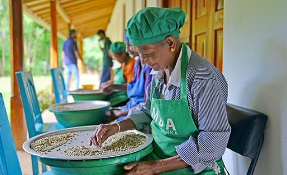 Artisanal Tea Making & Trek - Ella -  Sri Lanka In Style