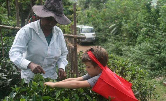 Tea, Treks and Tranquillity - Ella -  Sri Lanka In Style
